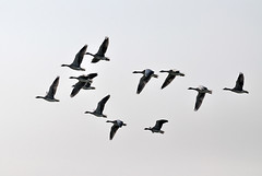 Oche selvatiche () Tags: holland netherlands amsterdam photography photo foto photographer photos fotografia olanda stefano waterland fotografo trucco zush stefanotrucco