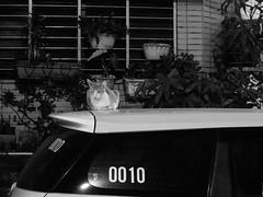 [冷靜的貓] (funkyruru) Tags: bw cat taiwan snap taipei 黑白 貓 mzuikodigitaled40150mmf4056 olympusomdem5