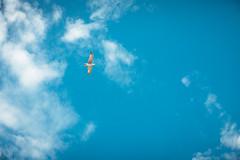 (Just A Stray Cat) Tags: blue sea sky sun seagulls color bird film beach field birds clouds analog 35mm canon 50mm seaside sand nikon rocks fuji dof bokeh seagull grain shoreline sunny s bulgaria shore 5d f3 mm analogue manual 12 nikkor 35 provia depth ai f12 100f nessebar ainikkor50mmf12s