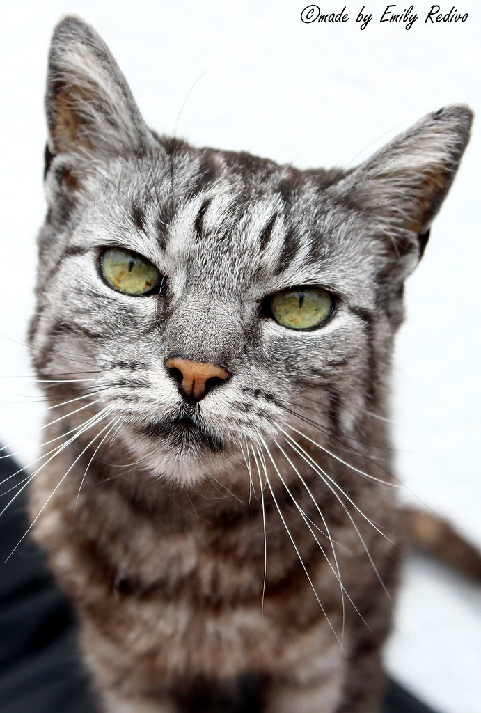 Referat über katzen