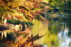 Pool II (Joe Josephs: 3,122,834 views - thank you) Tags: newyorkcity autumn fall landscape fallcolor centralpark fallfoliage landscapephotography urbanparks nikond800e copyrightjoejosephsphotography copyrightjoejosephs2013 nikon70200f40