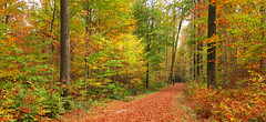 Autumn Forest (Batikart) Tags: autumn light orange brown black color colour tree fall nature leaves yellow fauna forest canon germany seaso