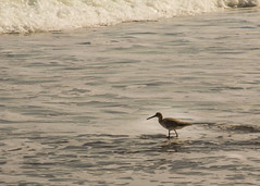 IMG_1795-2.jpg (KRoark) Tags: ocean thanksgiving autumn sea bird fall beach birds coast florida atlantic coastline avian seabird 2013