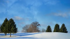 Winter Beauty (bjebie) Tags: trees winter ohio snow nature beauty sunshine clouds day bluesky pinetrees mogadoreohio pwwinter pwpartlycloudy