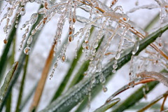 ice jewels (Mr.  Mark) Tags: winter storm cold detail macro ice grass frozen photo stock freeze delicate jewels markboucher