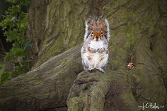 Bit Nippy (Jchales.co.uk) Tags: park winter orange lake green animals squirrel squirrels colours sunday meadows overcast friendly essex catchy dull tame diffuser billericay oncamera strobist flickrexportdemo 580exii canonef70200mmf28lisiiusm jchalescouk