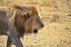 D7K_4529 (Scouta) Tags: africa elephant children monkey eagle kenya nairobi lion safari ngorongoro crater rhino giraffe zanzibar masai