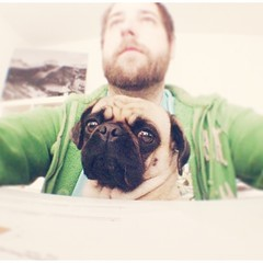 Helping daddy @ work by sitting on his lap and just being cute (brat_ro) Tags: instagramapp square squareformat iphoneography uploaded:by=instagram lola pug dog animal pet cute pretty adorable fun lol doggy funny hund mops carlino chien tier tiere instagram photo photography pets pugs puppy cane