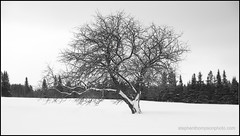 Winter Ent (stephenisabellemaggie) Tags: winter snow canada cold landscape quebec beauce ringexcellence dblringexcellence tplringexcellence eltringexcellence