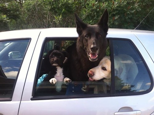 VW Dog Mobile!