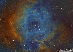 Caldwell 49 - Rosette Nebula - Hubble Palette Narrowband (Simon Todd Astrophotography) Tags: photoshop ninja cluster ha noise ccd deepspace celestron sii oiii deepsky nebulosity irishastronomy skywatcher narrowband rosettenebula atik c80ed starlightxpress astrometrydotnet:status=solved qhy5 hubblepalette neq6pro caldwell49 383l sequencegeneratorpro qhy5lii moneceros astrometrydotnet:id=nova254002