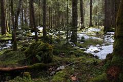 In the Woods (el rafa*) Tags: wood white black schweiz switzerland woods suisse suiza twin twinpeaks fribourg peaks svizzera freiburg wald fort schwarzsee bosco friburgo inthewoods lacnoir marzo2014 olaffeien forestalodge