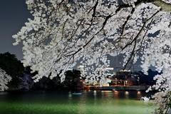 DSC00920 (Nakagawa Takuma) Tags: japan photography tokyo 桜 sakura cherryblossoms sonyrx1 sonydscrx1r takumanakagawa