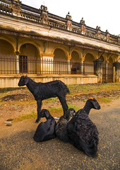 Family Of Goats In Front Of An Old Mansion In Kanadukathan Chettinad, India (Eric Lafforgue Photography) Tags: road travel india house color colour animal animals architecture outside outdoors carved ancienthistory gate day balcony goat goats portal lying thepast tamilnadu luxurious colorimage indianculture animalfamily chettinad blackgoats traveldestination indiansubcontinent touristicdestination animalontheroad familyofgoats groupofanimal kanadukathanchettinad chettiarmansion