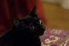 Coda cat
