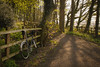 Woodland ride (dahowes) Tags: trees bike woodland shadows cycle cyclepath d80 18135mmf3556g dahowes