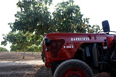 IMG_0370 (ACATCT) Tags: old espaa tractor spain traktor agosto toledo antiguo massey pistacho tembleque barreiros 2015 bustards perdices liebres avutardas ff30ds r350s