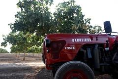 IMG_0370 (ACATCT) Tags: old españa tractor spain traktor agosto toledo antiguo massey pistacho tembleque barreiros 2015 bustards perdices liebres avutardas ff30ds r350s