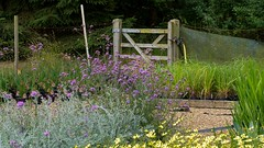 Gate (Mike Cook 67) Tags: hertfordshire hertford gardencentre daisyroots londontoad