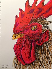 A rooster a day, day 25 (anviss) Tags: rooster haan tekening drawing illustration illustratie schets sketch ink tombow pentel stabilo