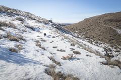 Desert snow (johnwporter) Tags: hiking scramble mountains easternwashington centralwashington washington desert steamboatrock grandcoulee coulee bankslake 徒步 爬行 山 華盛頓東部 華盛頓中部 華盛頓州 荒漠 大深谷 深谷 班克斯湖 輪船岩 labrador yellowlab 拉布拉多 黑拉不拉多 黃拉不拉多 blacklab