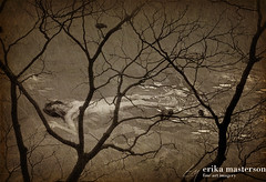 birdtree (mastersonerika) Tags: trees sepia river warm ethereal dreamy organic soulful blackbirds drowning serial birdsintree