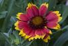 DAISY. (Papucho Photography) Tags: photomix mygearandme blinkagain flowerthequietbeauty