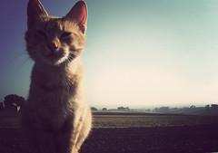 (_rychard_) Tags: field cat backyard dorf village feld poland polska polen katze gatto kot hof paese lsk schlesien wie uppersilesia oberschlesien bergkirch sawikw slawikau slawikow