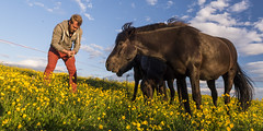 Bringer of grass (mar Smith) Tags: summer vacation iceland nikon europe north sland akureyri d600 hsavk norurland