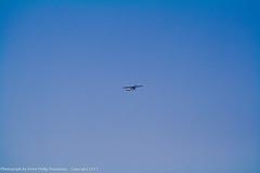 IMG_3795 (peterdomantay) Tags: riyadh saudiarabia rcplanes peterdomantay rchobbyist peterphilipdomantay