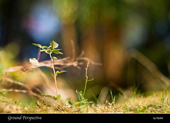 Ground Perspective (Nyllet) Tags: sunlight water grass leaves moss bokeh ground konicahexanonar8518
