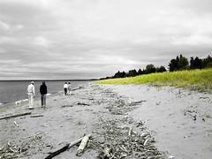 park point (californiabirdy) Tags: trees sky green beach grass minnesota canon sand horizon driftwood lakesuperior parkpoint beachwalk coloraccent s95