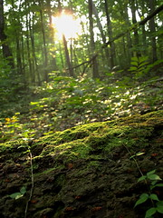 Light in the Forest (tim.perdue) Tags: park trees light columbus shadow ohio sun sunlight green nature leaves forest moss log metro powell highbanks plantswoods