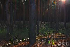 Wald HDR (Pette-P) Tags: wood autumn forest licht warm sonnenuntergang bokeh herbst sonne wald bltter bume sonnenaufgang baum bunt stimmung abendlicht sonnenlicht