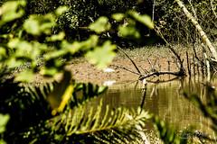 Paparazzi de Gara (Daniel Dalonso) Tags: brazil brasil canon santacatarina gara paisagens joinville manguezal riocachoeira t2i 55250mm