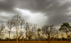 Waiting for the rain (CreateEvoke) Tags: trees light sunset panorama weather clouds 35mm evening bush nikon october australia panoramic explore louise outback kimberley d800 boab topend landscapephotography 2013 createevoke