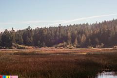 Countryside Rhyme (Pacific NW / Nor Cal Surveyor (2,100,000 Thanks!!)) Tags: life nature colors beautiful beauty northerncalifornia wow relax 50mm quiet peace peaceful lagoon calm enjoy serenity selfreflection serene norcal picturesque refreshing humboldtcounty beautifulclouds biglagoon us101 northcoast godscountry redwoodhighway peaceofmind ushighway101 marinate nikonlens humboldtlagoonsstatepark 50mmphotography norcalphotographers humboldtcountycountryside nikonlensattachedtosonynex3 biglagoonbridge