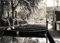 Sailing by (iandunphy) Tags: autumn people bw tree water river october bank oxford riverbank christchurchmeadow headoftheriver 2013 waterriver salterssteamers