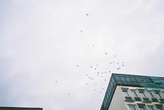 Wheeling (knautia) Tags: uk england film birds bristol october fuji pigeons flock olympus ishootfilm xa2 olympusxa2 wheeling 400iso fujisuperia 2013 xa2roll105