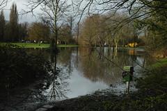 Shepperton floodwaters SDIM1048 (StefanSzczelkun) Tags: trees reflections flooding january floods parkland foveon 2014 thameside shepperton dp2