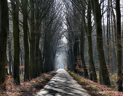 X (joeke pieters) Tags: road trees light shadow holland netherlands licht bomen nederland schaduw achterhoek weg gelderland platinumheartaward mygearandme mygearandmepremium mygearandmebronze panasonicdmcfz150 1130993