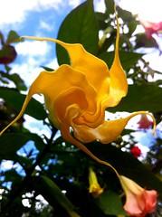 YellowTwister