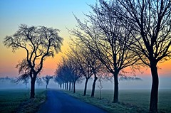 Road in the Morning (Tobi_2008) Tags: trees sky sun mist color nature field fog sunrise germany landscape deutschland soleil nebel saxony natur feld himmel ciel sachsen tobi landschaft sonne farbe bume sonnenaufgang allemagne germania diamondclassphotographer flickrdiamond mygearandme mygearandmepremium mygearandmebronze