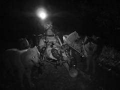 The WooFPAK At Night