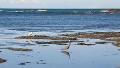 456 - Reflet de l'oiseau à Kaikoura Range