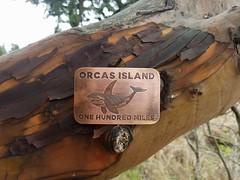 First 100 Miler (Ryan Good) Tags: ultrarunning ultramarathon hundo hundredmiler orcasisland orcasisland100 rainshadowrunning sanjuanislands