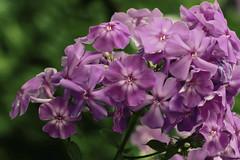 Flowers. (ost_jean) Tags: flowers ostjean nikon d5200 tamron sp 90mm f28 di vc usd macro 11 f004