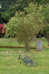 Clackamas Pioneer Cemetery roses (David A's Photos) Tags: county roses white cemetery oregon stevens may pioneer clackamas 2013