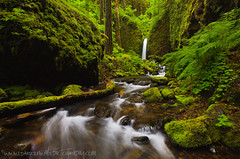 Emerald Canyon (Darren White Photography) Tags: white nature water oregon landscape outdoors waterfall spring scenic waterfalls grotto ferns mossy springtime outdoorphotography oregonlandscapes darrenwhite outdoorphotographer oregontravel oregontourism darrenwhitephotography landscapesofthenorthwest landscapesoforegon landscapesofthepacificnorthwest