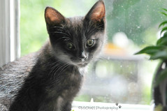 Olijfje (MiChaH) Tags: pet black window ferry kitten kat olive huisdier poes raam 2013 olijfje